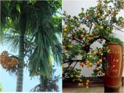 """Chọn đúng """"cây thần"""" gác cổng giúp xua đuổi tà khí, lộc vượng quanh năm"""