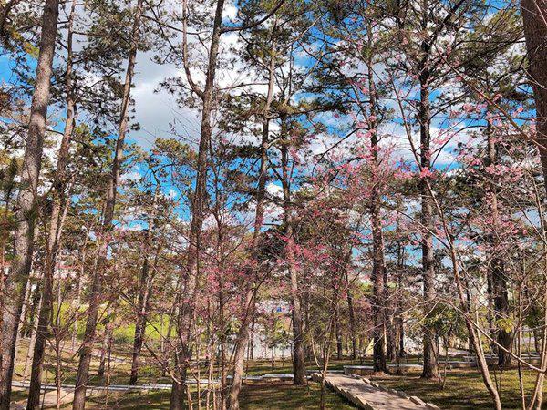 """Ngẩn ngơ ngắm ngôi trường đại học """"đẹp nhất Đông Nam Á"""" giữa rừng hoa Đà Lạt"""