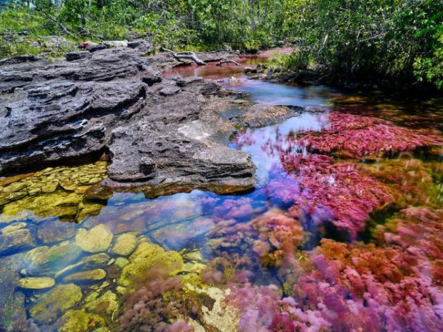 Chiêm ngưỡng vẻ đẹp kỳ bí của dòng  sông lạc khỏi thiên đường