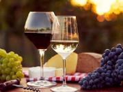 Rượu vang - câu chuyện của những người nông dân trồng nho phục vụ cho giới quý tộc