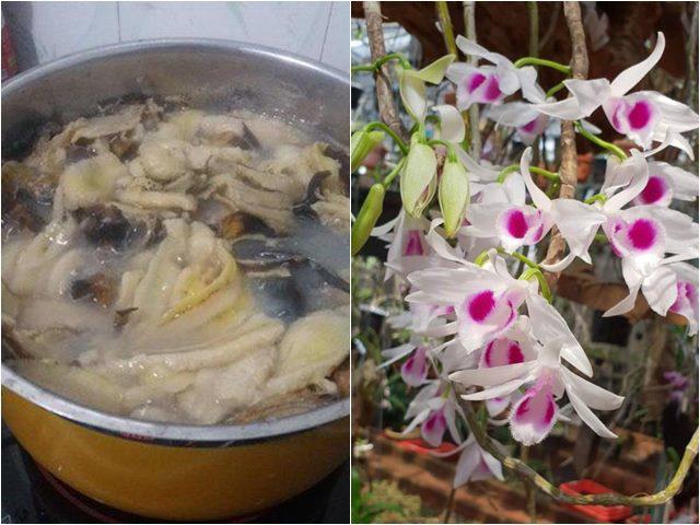 Nấu chuối tưới cho phong lan, 1 tuần sau rễ mọc chi chít hoa tuôn như suối