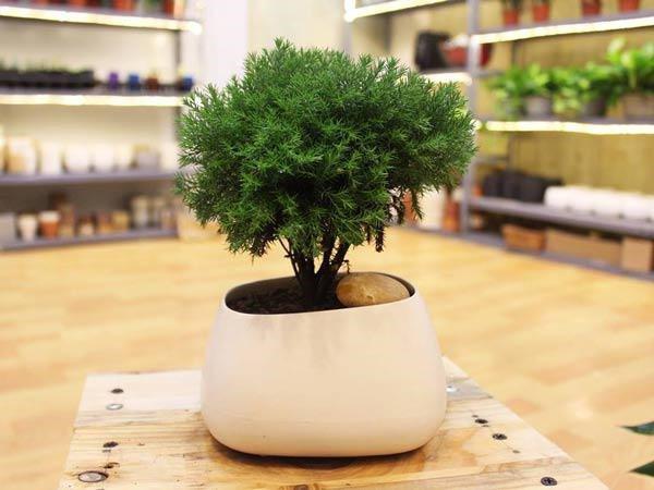 Tuổi Sửu hợp cây gì? Những loại cây giúp tuổi Sửu thêm giàu sang, phú quý