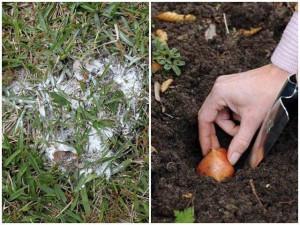 Phấn rôm không chỉ để trị tóc bết, mang rải ra vườn còn có tác dụng thần kì