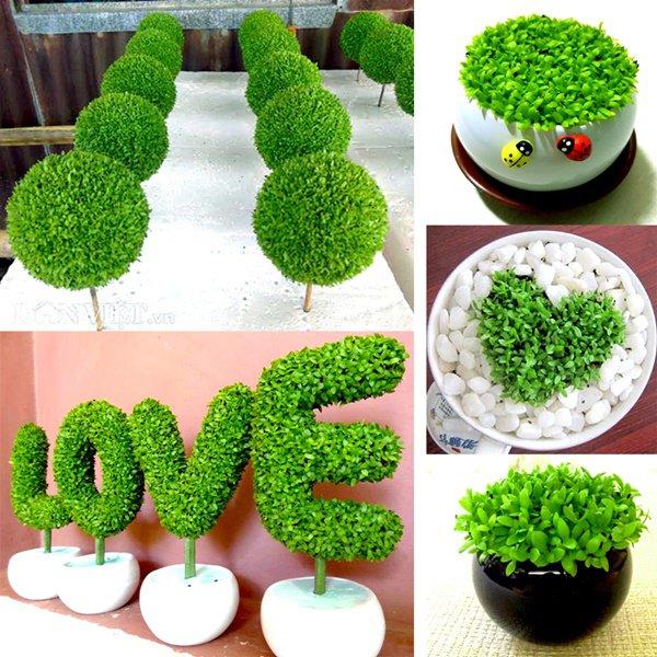 Tuổi Dần hợp cây gì? Người tuổi Dần nên trồng cây gì để năm mới được bình an, may mắn