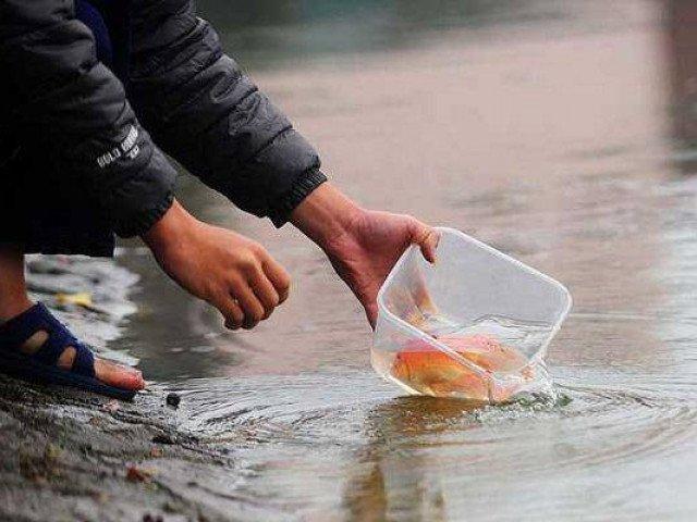 Cách thả cá chép cúng ông Công ông Táo sao cho ý nghĩa và linh thiêng nhất?