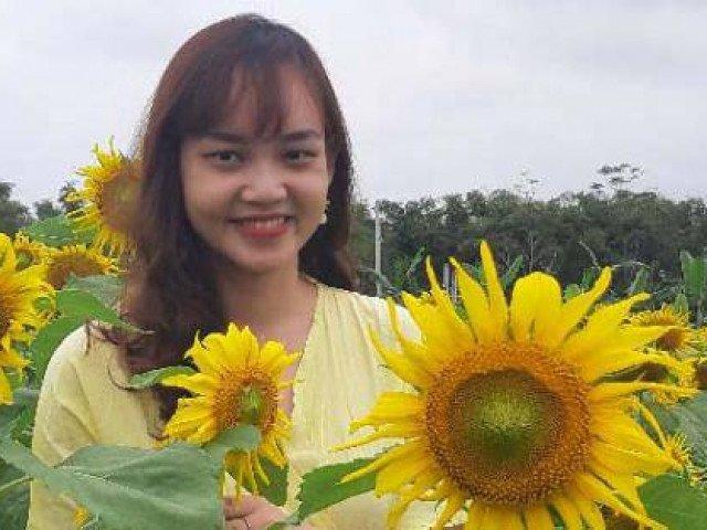 Quảng Nam: Giáp Tết, vườn hướng dương tấp nập khách vào xem