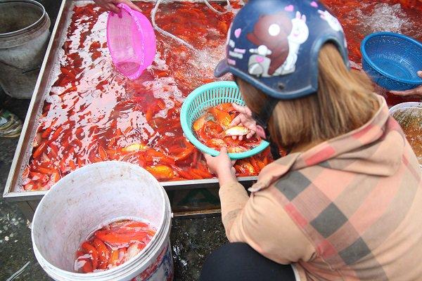 Chợ cá lớn nhất Hà Nội rực đỏ, tiểu thương mách cách chọn cá khỏe mạnh cúng Táo quân