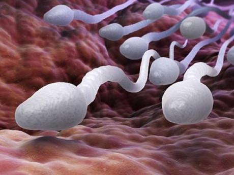 Đàn ông sau khi thắt ống dẫn tinh, tinh trùng sẽ đi đâu?