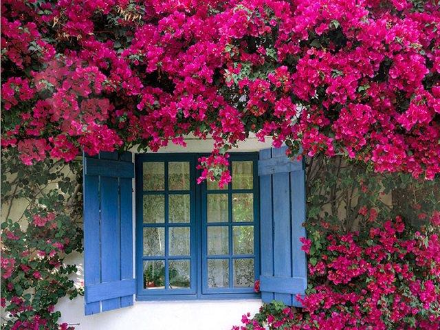 10 loại hoa trồng ban công hô biến ngôi nhà thêm rực rỡ, nhà nào cũng nên có