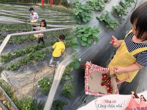 Khám phá vườn dâu tây cực xinh xắn ngay Hà Nội để mẹ và bé cùng trải nghiệm