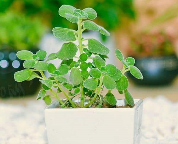 8 loại cây trồng trong phòng ngủ làm sáng bừng không gian, cải thiện giấc ngủ - 5