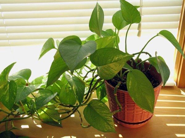 8 loại cây trồng trong phòng ngủ làm sáng bừng không gian, cải thiện giấc ngủ - 10
