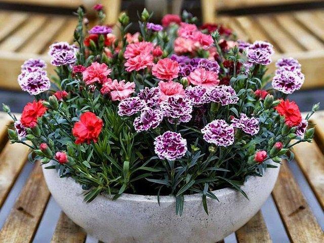 Các loại hoa dễ trồng trong chậu giúp hô biến nhà thêm rực rỡ, vạn người mê