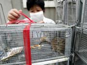 Hantavirus khiến một người tử vong ở Trung Quốc là gì và có nguy cơ thành dịch không?