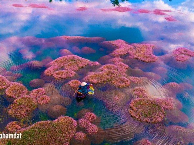 Ngất ngây trước vẻ đẹp của hồ Tảo Hồng Lâm Đồng, chụp ảnh cứ gọi là xuất sắc!