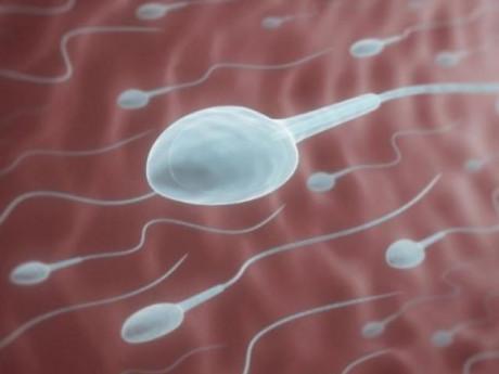 Tinh trùng sống được bao lâu trong tử cung?