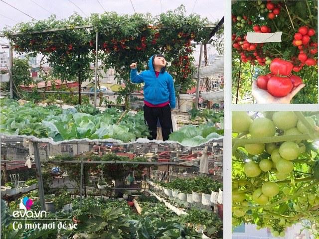 Giữa lòng thủ đô, thanh niên làm vườn ao chuồng, thu về cả tạ cá, cà chua, su hào...đủ loại