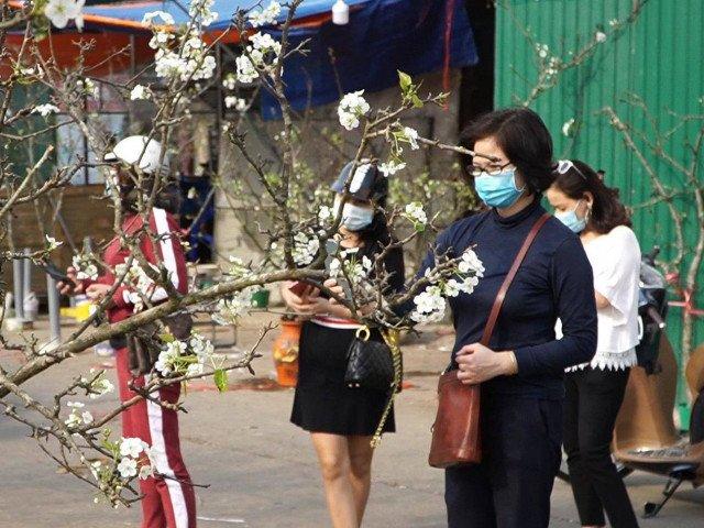Hoa lê rừng xuống phố khoe sắc trắng muốt, hàng nghìn người dân Thủ đô chen nhau mua