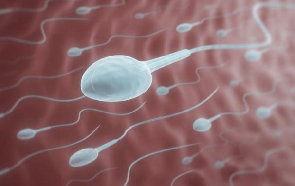 Tinh trùng sống được bao lâu sau khi xuất tinh? - 1