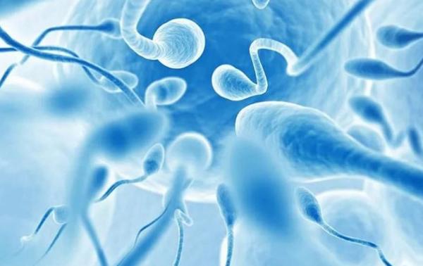 Tinh trùng sống được bao lâu sau khi xuất tinh? - 3