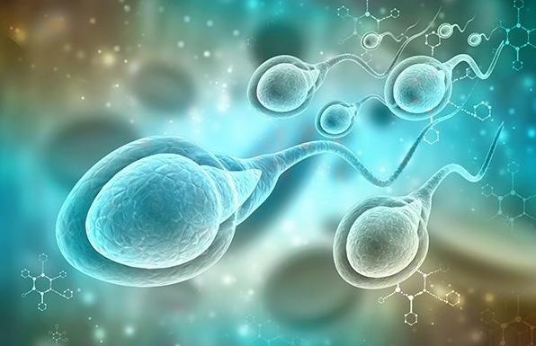 Tinh trùng sống được bao lâu trong tử cung để chờ trứng và thụ thai? - 4