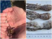 Đi biển thấy con bạch tuộc đẹp liền cầm lên, người phụ nữ hãi hùng khi biết mình suýt chết