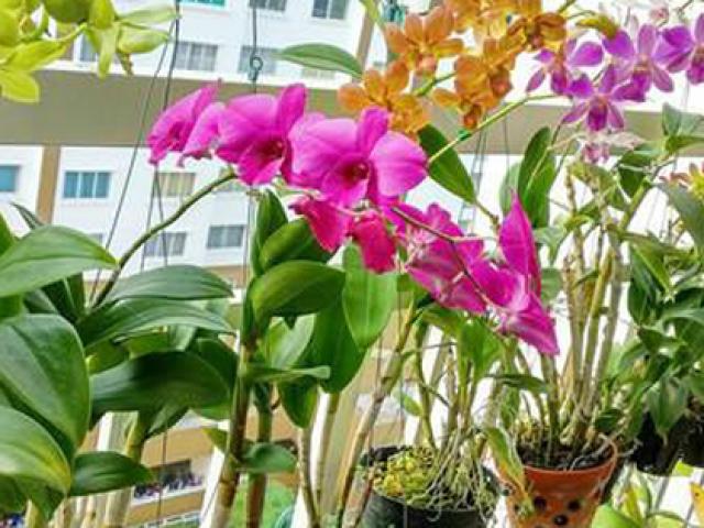 Cách chọn các loại cây hoa lan khỏe đẹp, dễ trồng, dễ sống