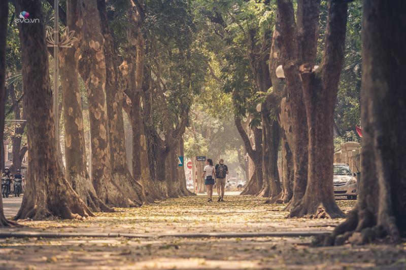 Ở Hà Nội, ngoàiđường Hàn Quốc, đường Nhật Bản (Tây Hồ)được các bạn trẻ yêu mến gọi têncon đường tình yêu vì là chốnhò hẹn quen thuộc của biết bao cặp đôi, còn có một con đường nổi tiếng không kém bởi sự lãng mạn, đó chính làPhan Đình Phùng.