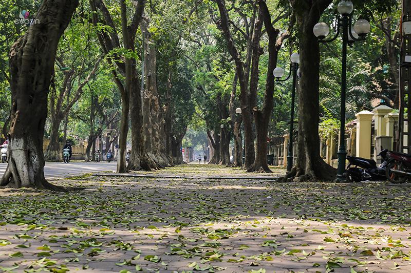 Đường Phan Đình Phùng mùa lá sấu rụng: Thì ra Hà Nội có lúc tình đến thế!