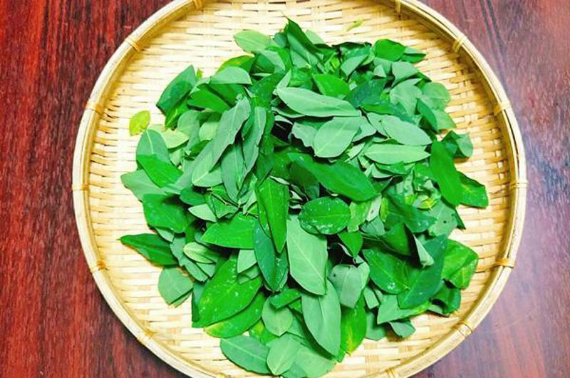 Theo đông y, rau ngót là một loại thảo dược có đặc tính mát, giải nhiệt và đặc biệt là rất lành tính. Về mặt ẩm thực, rau ngót cũng là một loại rau rất dễ ăn và kết hợp cùng các món khác.