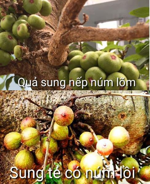 3 cach muoi sung ngon an gion khong chat de duoc lau - 1