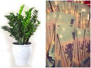 """5 loại cây """"ăn tiền thiên hạ"""" đặt phòng khách giúp gia chủ thu tài hút lộc cực tốt"""