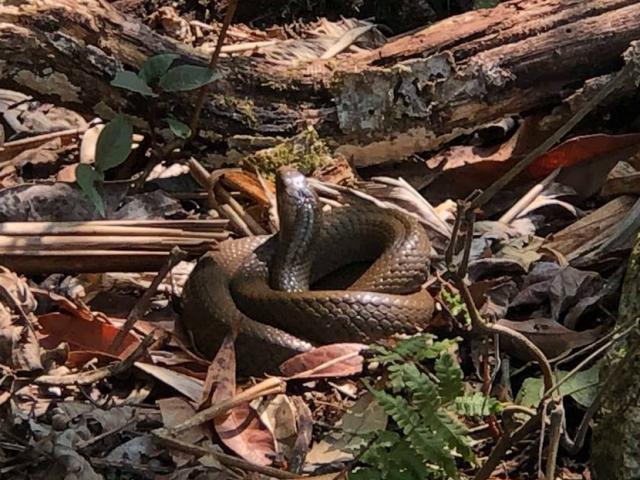 Khiếp vía khu rừng lúc nhúc các loài rắn độc trên đỉnh Pu Ta Leng