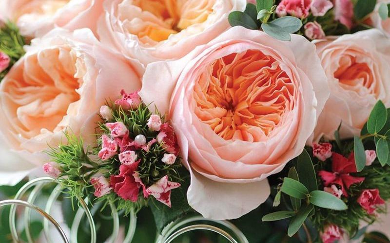Dẫn đầu danh sách những loài hoa đắt đỏ nhất hành tinh là hồng Juliet - một loại hoa hồng cổ vô cùng quý hiếm ở nước Anh. Có những bó hoa hồng Juliet trị giá lên tới hơn 15 triệu USD (khoảng 330 tỷ đồng).