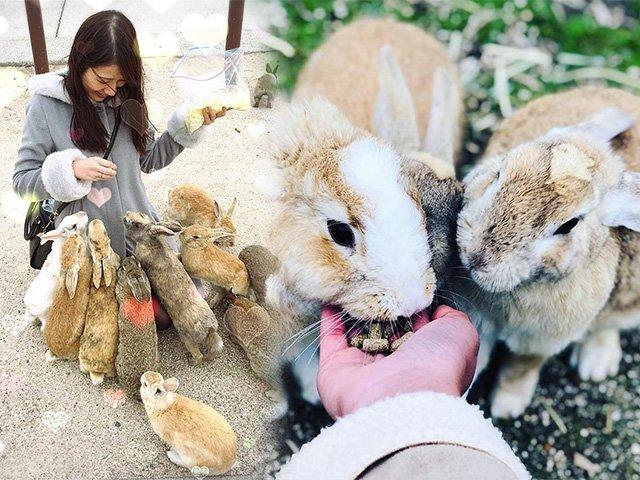 Ngập chìm trong sự đáng yêu khi ghé thăm hòn đảo có thỏ nhiều hơn cả người