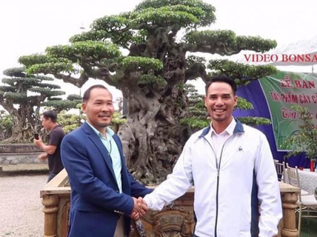 4 đại gia cây cảnh sở hữu báu vật tiền tỷ, bán cả nhà Hà Nội để mua cây