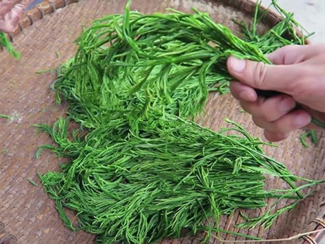 Loại rau thối um nhưng là đặc sản Tây Bắc và dễ gây nghiện, ở Hà Nội bán 90.000đ/mớ