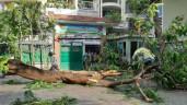 Clip: Khoảnh khắc cây phượng bật gốc, đè học sinh trong sân trường Bạch Đằng