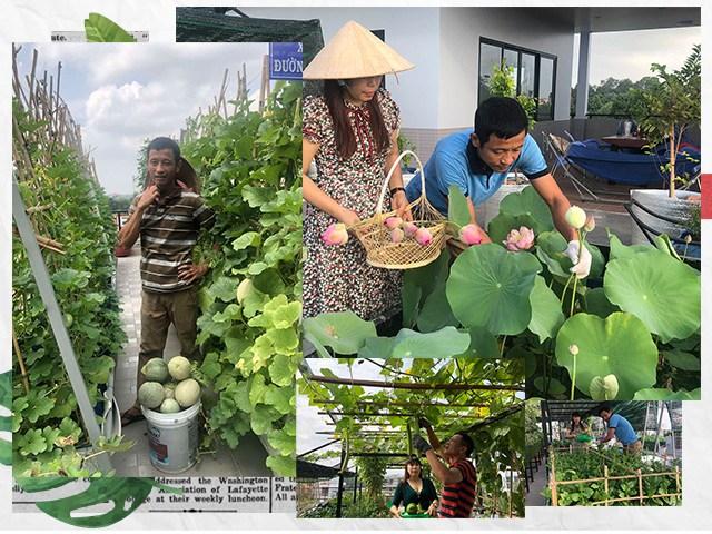 Bố Sài Gòn biến sân thượng thành vườn rau, ăn không hết phải nài nỉ hàng xóm sang lấy về