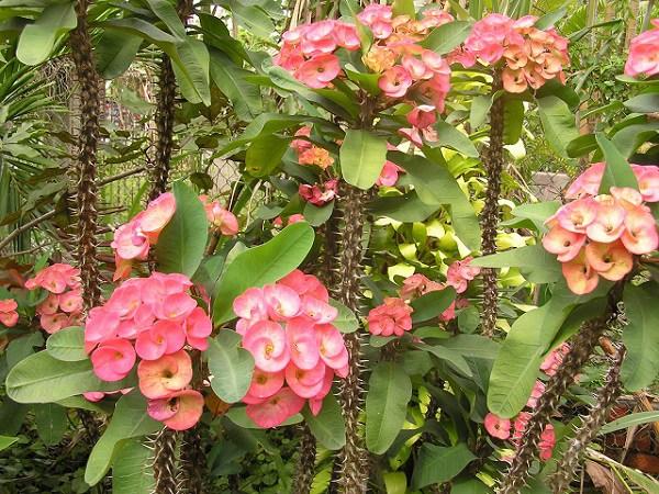trong xuong rong bat tien de nhu choi, khong cham soc hoa van dua nhau no - 1