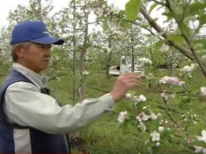 Trang trạitrồng táo đắt nhất thế giới có gì đặc biệt?