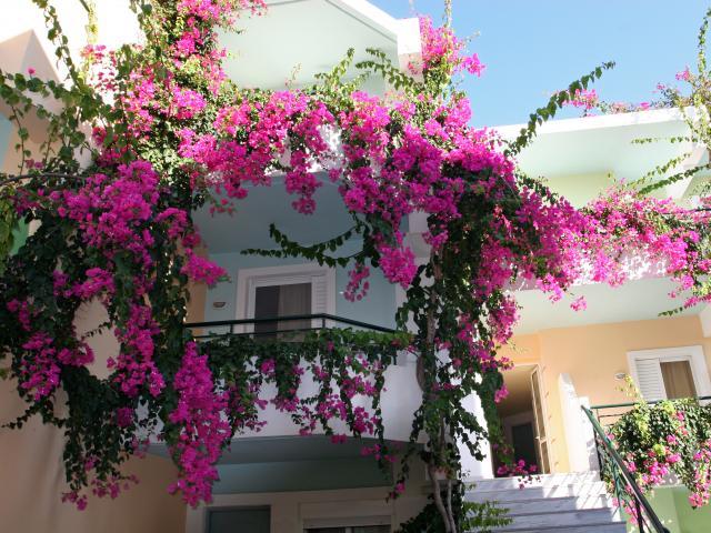 Tháng 5 thích hợp để giâm 4 loại hoa này, bén rễ cực nhanh, nở hoa to vào mùa hè