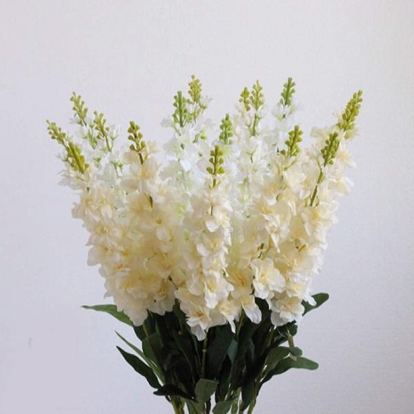 Ý nghĩa hoa Phi Yến - Cách trồng và chăm sóc loài hoa đẹp đẽ của tháng 7 - 3