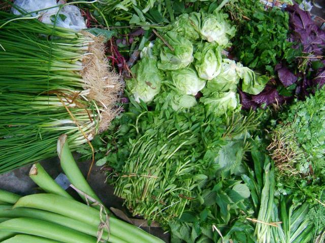 Tác dụng của rau thơm là gì? 12 loại rau thơm phổ biến và công dụng với sức khỏe