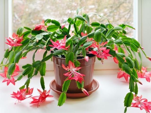 Có 2 vị trí trong nhà đừng dại đặt hoa, nếu đã lỡ trồng nên di chuyển đi chỗ khác
