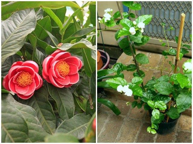 5 loại hoa nở đẹp lại dễ trồng, để trong bóng râm lâu ngày vẫn phát triển tốt