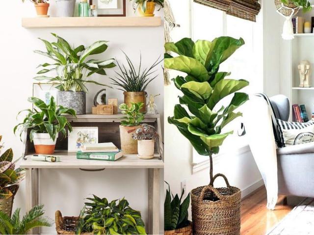 6 loại cây được ví như điều hòa, có thể giảm nhiệt tới 10 độ mà không tốn 1 xu