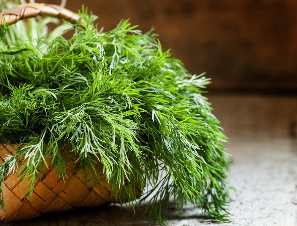 Tác dụng và tác hại của rau thì là - 3