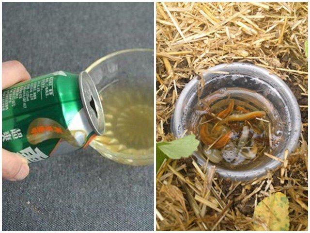 Mang 1 chút bia đổ ra vườn, sáng ra dụi mắt 3 lần vì cảnh lạ khó tin