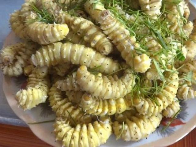 Những đặc sản sâu bọ sống bò nhung nhúc từ 3 miền